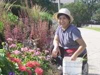 Volunteer weeding