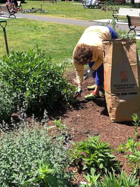 Volunteer plants