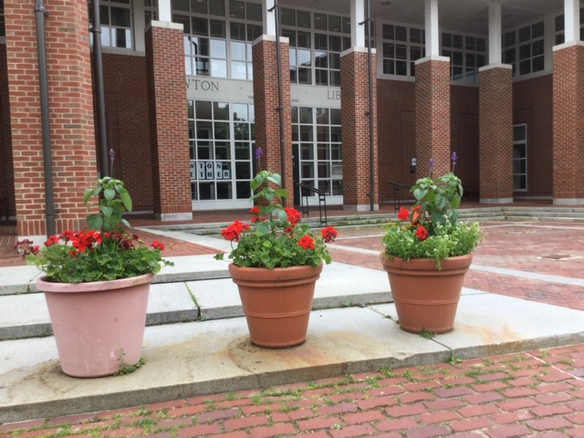 Library Flower Pots