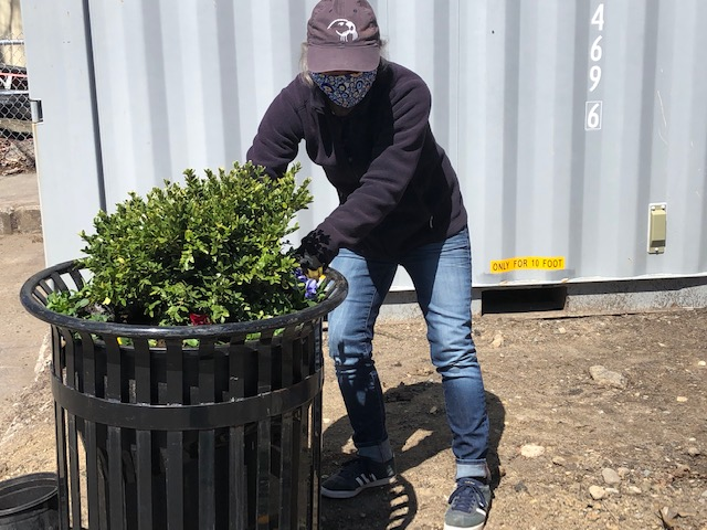 woman in grey hat planting